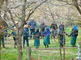 Amish Chilldren Playing - from amishstories.net