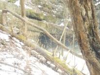 amish cave (2)