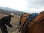 amish horse (1)