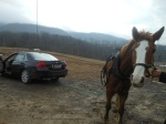 amish horse (2)