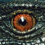 Panay monitor lizard