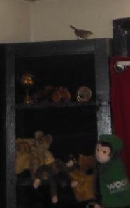 above shelves2
